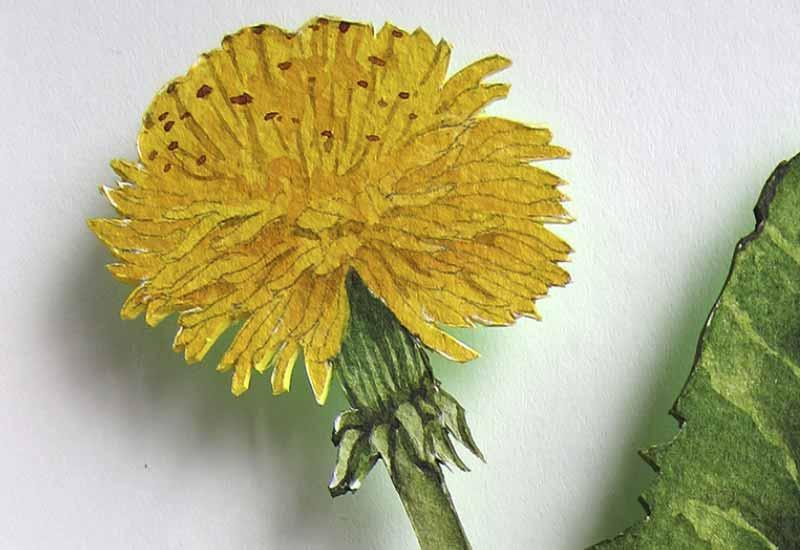 Der Blumen Code