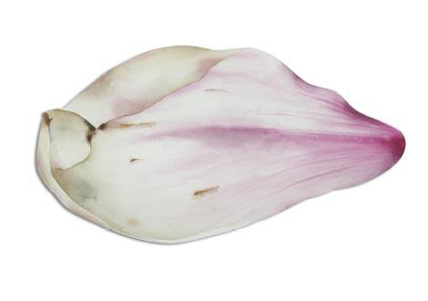 Blattwerk Magnolie