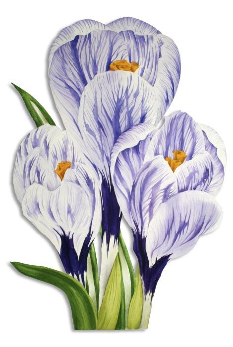 Krokus Aquarell auf Bütten violett