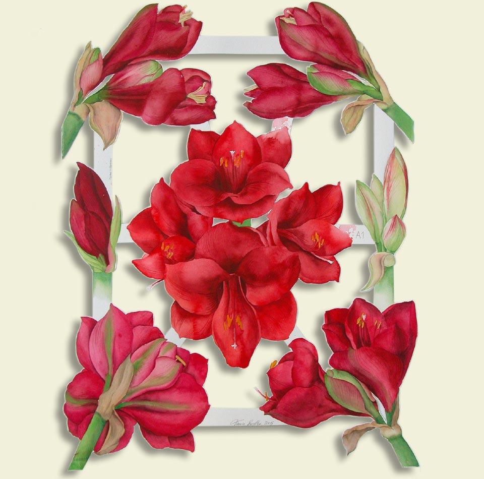 Schnittblumen Amaryllis