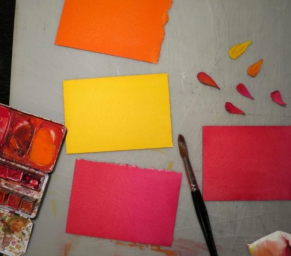 Zinnia couleur – Farsystematik