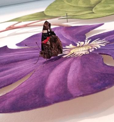 Die Rückkehr der schonen Gärtnerin Clematis Schmetterling