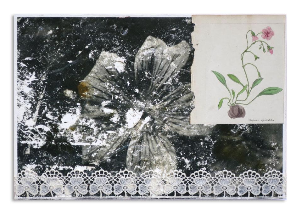 Die Fundblume Collage